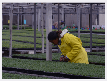 Danziger Kenya nursery is founded