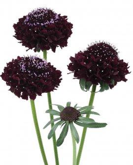 blackberry scoop-02