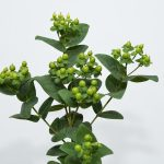 BRISK™ Green lime